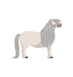 white pony with grey mane thoroughbred horse vector image