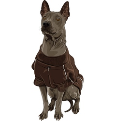 Thai Ridgeback Dog breed sitting vector image vector image