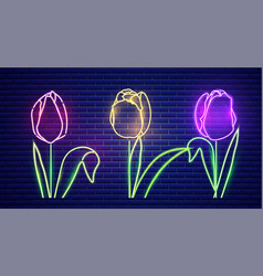 tulip flowers neon light vintage board vector image