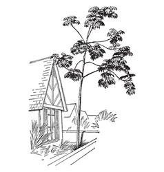 cecropia palmata vintage vector image