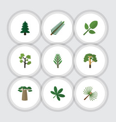 Flat icon bio set of spruce leaves rosemary wood vector
