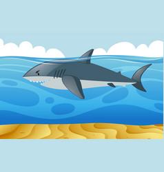 wild shark swimming under the sea vector image