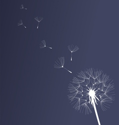 Dandelion black and white vector