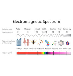 electromagnetic spectrum diagram vector image