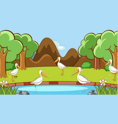 scene with pelican birds in forest vector image