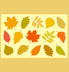 set hand drawn autumn leaves vector image