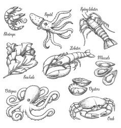 Set isolated underwater seafood sketches vector