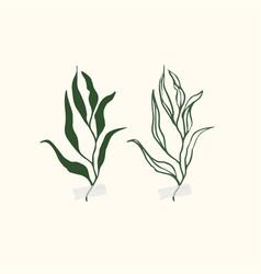 botanic botanical clipart vector image
