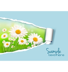 daisy and ripped paper vector image