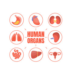 human organs banner template with internal organs vector image