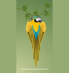 macaws1 vector image