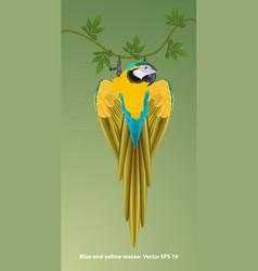 Macaws1 vector