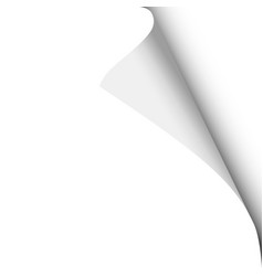 sheet white paper with curled corner vector image