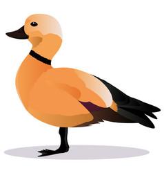 ogar bird vector image vector image