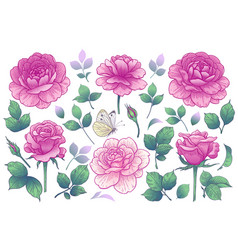 pink rose flowers buds and green leaves vector image