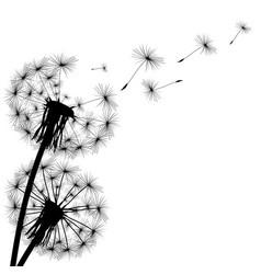 black silhouette of a dandelion vector image