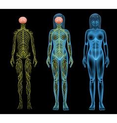 Female nervous system vector image