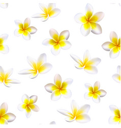 plumeria tropical flowers seamless pattern vector image