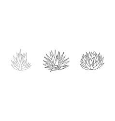 Succulent set aloe vera in doodle style vector