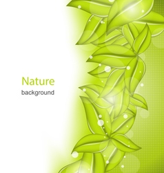 Summer Card with Eco Green Leaves vector image
