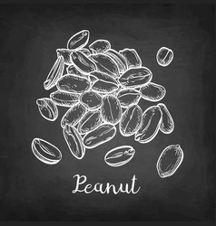 chalk sketch of peanut vector image vector image