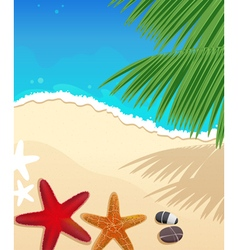 Beach with starfishes vector image
