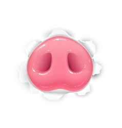 Drawing piglet nose sticking out of torn vector