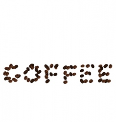 realistic illustration of coffee beans vector image