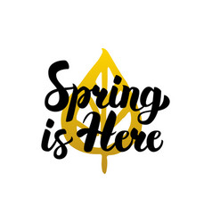 spring is here handwritten lettering vector image
