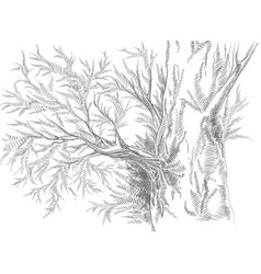 Stylized line hand-drawn graphical tree vector