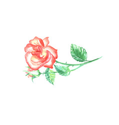 single red rose with green leaf vector image