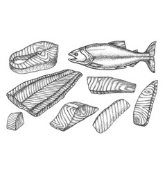 sketch icons salmon fish cut filet and steaks vector image