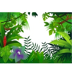 tropical rain forest vector image vector image