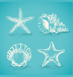 Decorative set sketch of seashells and starfish vector