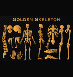 Golden luxury human bones skeleton silhouette vector