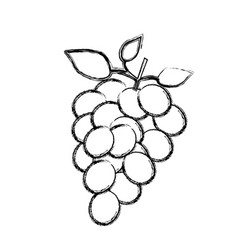 Monochrome sketch silhouette of bunch of grapes vector