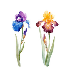 Watercolor iris set vector