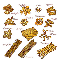 pasta and spaghetti sketch set of italian macaroni vector image vector image