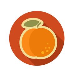 Peach flat icon fruit vector