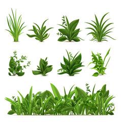 Realistic grass bushes green fresh plants garden vector