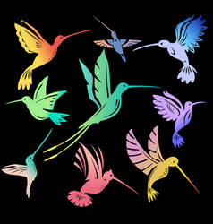 set colorful flying hummingbirds isolated vector image
