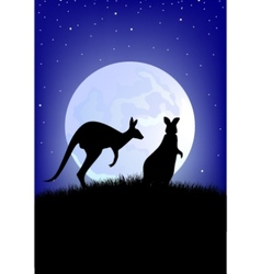 two kangaroo vector image