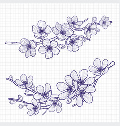 sketch style flowering cherry or apple tree branch vector image vector image