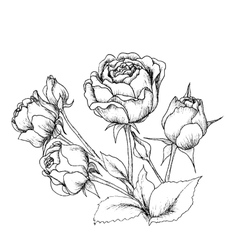 Highly detailed hand drawn roses vector image