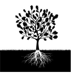 silhouette of oak tree vector image vector image