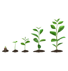 Realistic plant growth stages young seed growing vector