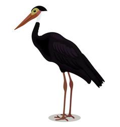 Storm s stork cartoon bird vector