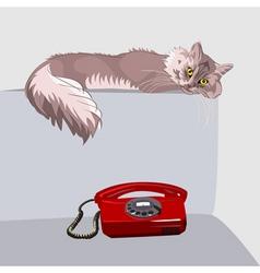 Tabby cat vector