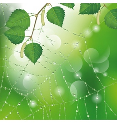 Spider web with leaves vector image vector image