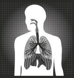 Human system respiratory vector